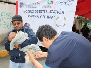 Campaña de esterilización. Foto: C. Social
